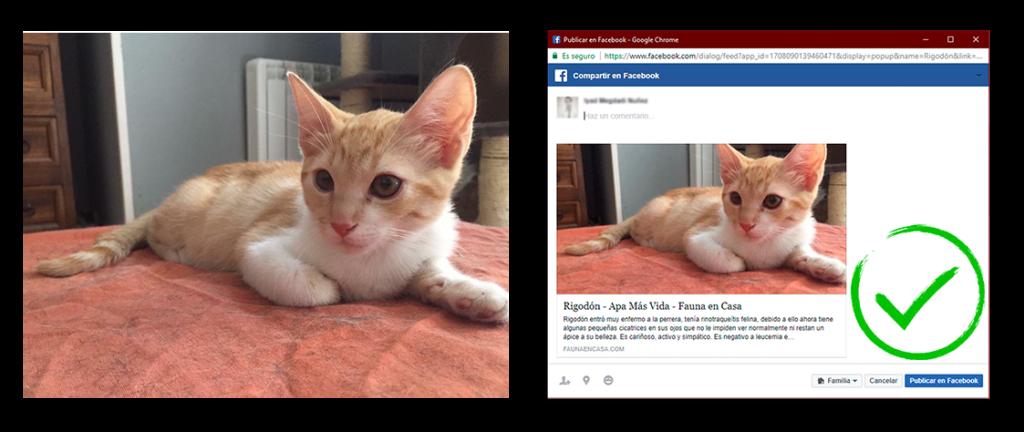 Imagen horizontal y ajuste automático realizado por las redes sociales (correcto)