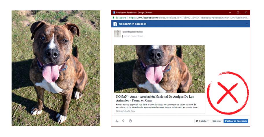 Imagen vertical y ajuste automático realizado por las redes sociales (incorrecto)